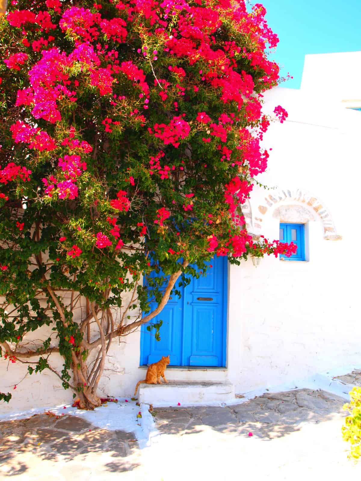 Hellenic Food Basket Amorgos