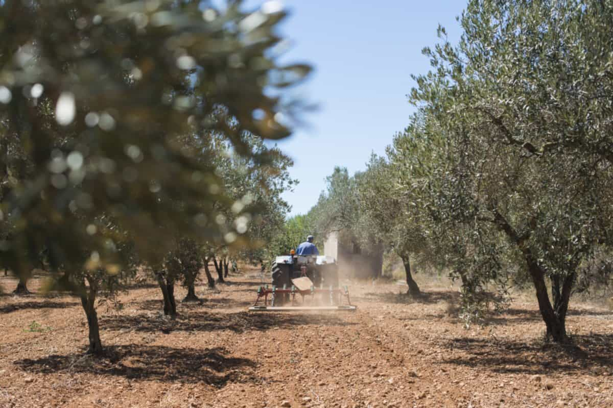 Hellenic Food Basket Tractor and olive trees