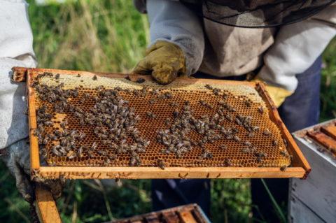 The Benefits of Greek Honey 1